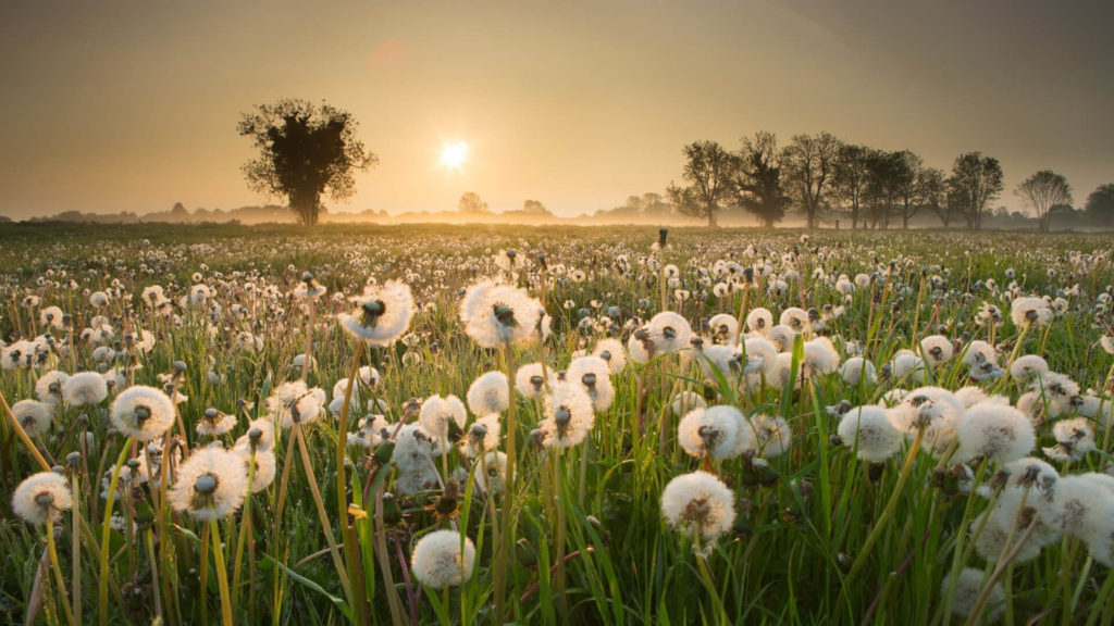 20 Beautiful Hd Nature Wallpapers Blogenium Free Wallpapers