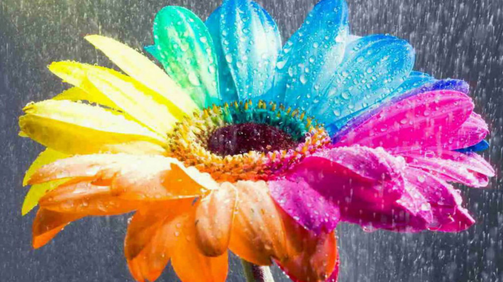 20 Single Flower Hd Wallpapers Blogenium Free Wallpapers