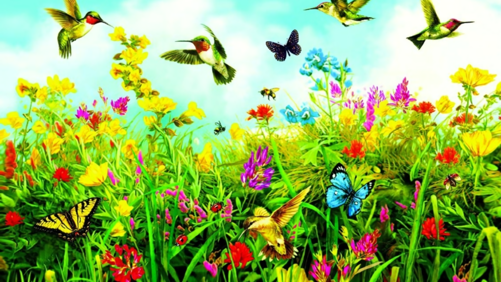 Butterflies and Birds